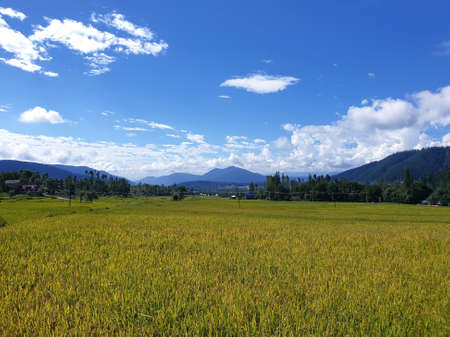 Photo pour View of cloudy blue sky beautiful villages and rice fields of villagers in Indian states. Green and yellow golden colour crops in India are best destination for travellers. - image libre de droit