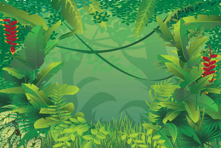 vector illustration of exotic tropical rain forest