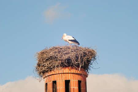 Photo pour A stork in the nest on top of a factories chimney - image libre de droit