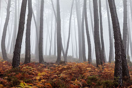 Beautiful view of a forest on a foggy day