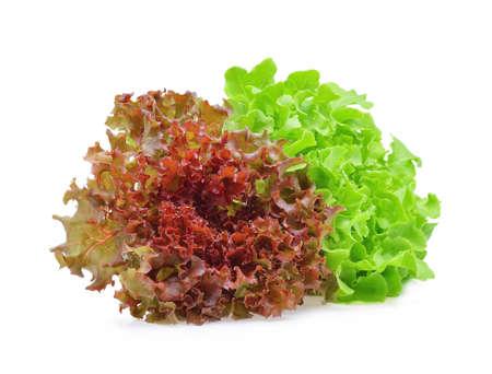 Foto für Red and green oak lettuce on white background. - Lizenzfreies Bild