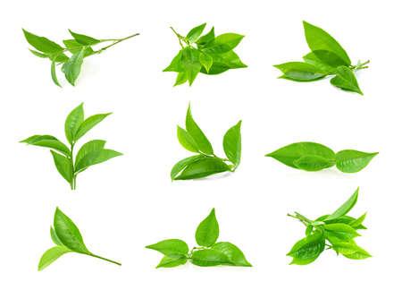 Photo pour green tea leaf isolated on white background - image libre de droit