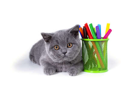 Photo pour The charming, gray, fluffy purebred British kitten, a glass with felt-tip pens, on a white background. welcome to school - image libre de droit