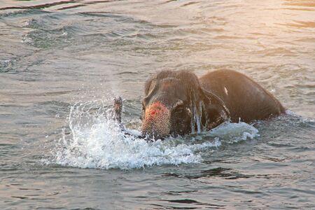 Photo pour India Hampi. Elephant swim in the river - image libre de droit