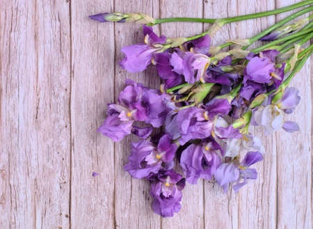 Photo for Bouquet collected in a bunch of purple iris flowers - Royalty Free Image