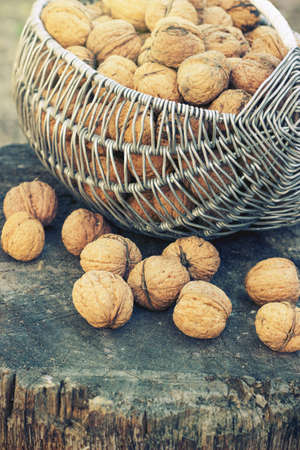 Basket with walnuts on a stump in the sun toning