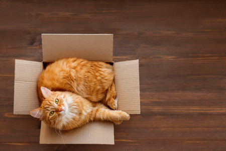 Foto für Cute ginger cat lies in carton box on wooden background. Fluffy pet with green eyes is staring in camera. Top view, flat lay. - Lizenzfreies Bild
