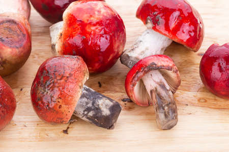 fresh red Rosy Russula Russula rosacea Pers. Ex S.F. Gray fungi from nature on wooden plate