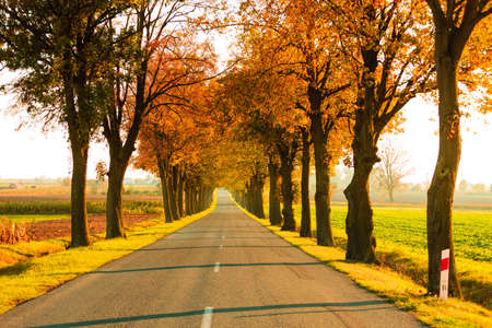 Photo pour Road running through autumn fall tree alley. Beautiful autumnal landscape, orange foliage - image libre de droit