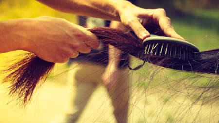 Horsemanship equipment, taking care of animals concept. Person hand brushing dark horse hair on tail with brush