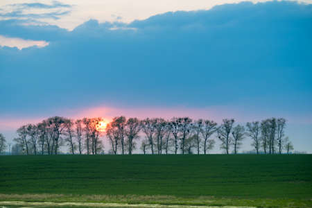 Beautiful landscape of sun during sunset hiding behind trees. Beauty of nature concept.