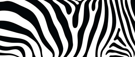 Photo pour Seamless abstract vector background design based on African wildlife animal texture pattern of zebra striped print style - image libre de droit