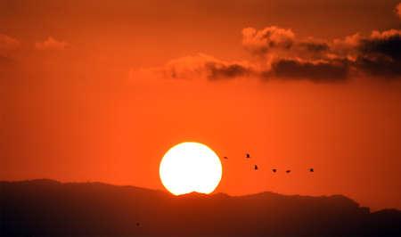 Photo pour a beautiful sunset on the sea - image libre de droit