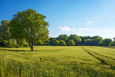 Photo pour Tree, field, meadow and forest - blue sky - image libre de droit