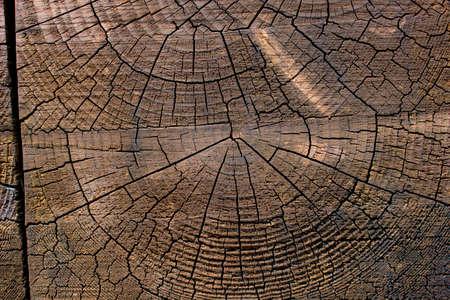 Foto per Texture Wood - Immagine Royalty Free