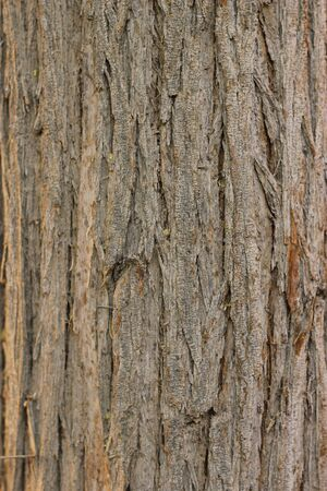 Natural Old Tree Wood Full Of Frame Good For Textures And Backgrounds