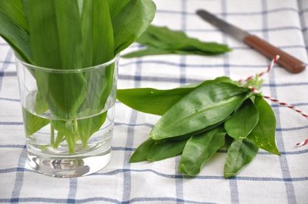 Fresh wild garlic Allium ursinum