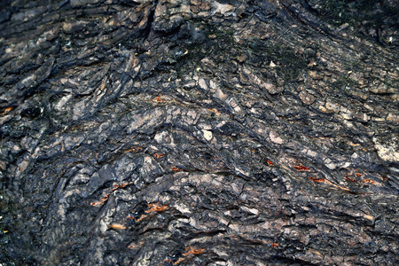 Bark of a tree of heterogeneous texture, volume texture of gray color with deep cracks, rays of light on the surface