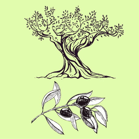 hand drawn ink olive branch, olive tree. vector eps 10
