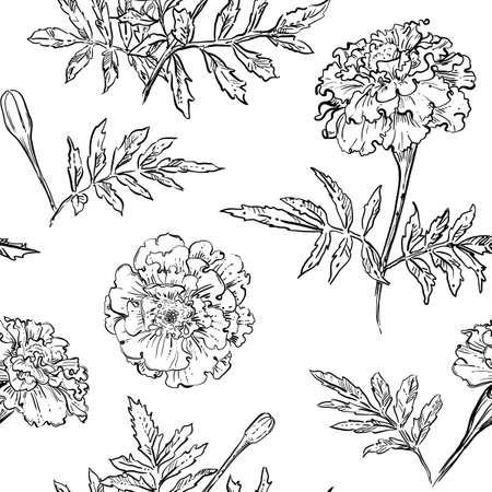 Illustration pour hand drawn vector seamless pattern of marigold flowers - image libre de droit
