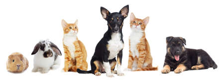 Photo pour Kitten and Puppy looking on white background - image libre de droit