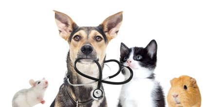 Photo pour dog and a cat and a stethoscope - image libre de droit