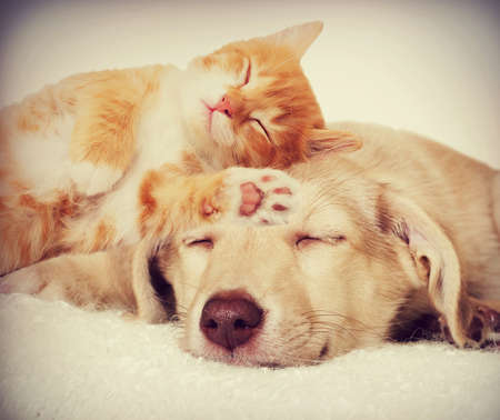 kitten and puppy sleepingの写真素材