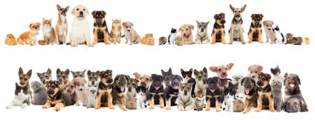 Photo pour Cat and puppy on a white background isolated - image libre de droit