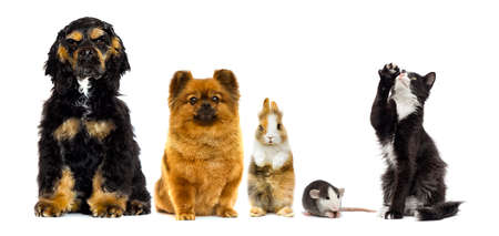 Photo for set of pets looks on a white background - Royalty Free Image
