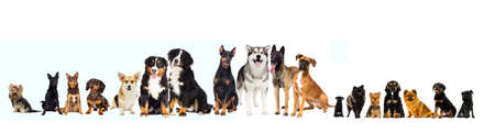 Photo for set of pets, dogslooking at white background - Royalty Free Image