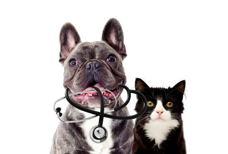 Photo pour Portrait of Veterinarian dog and stethoscope - image libre de droit
