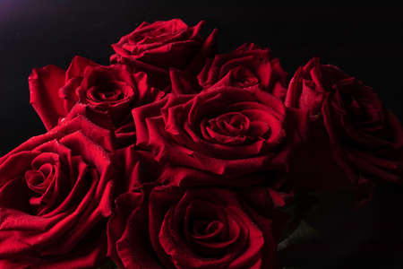 Photo pour A bright bouquet of lush red roses with clear lines of petals and small drops of water on a black background for a gift. - image libre de droit