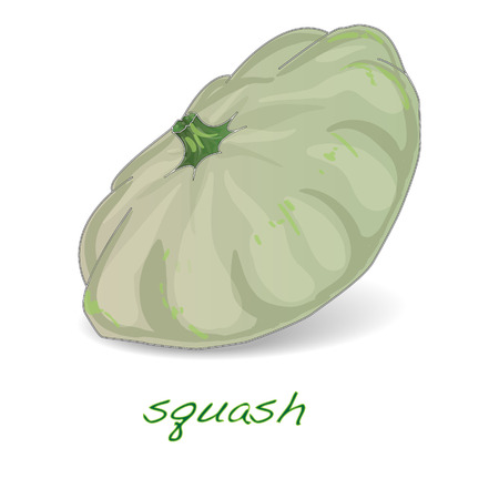 Scalloped custard squash  vector (Cucurbita pepo var. patisson), isolated