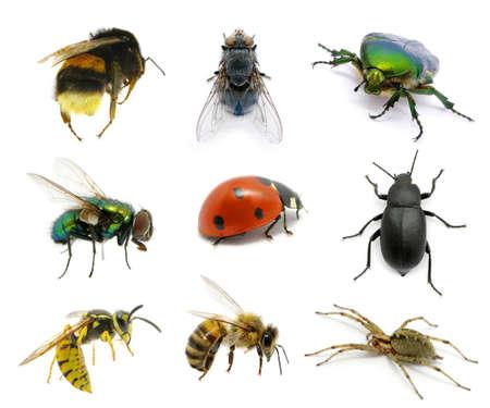 Photo pour  Set of insects on white - image libre de droit