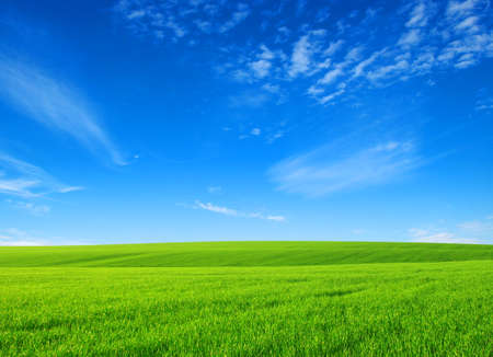 Photo pour field of green grass with white clouds - image libre de droit