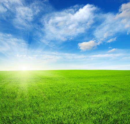 Photo pour Green field, blue sky and sun - image libre de droit