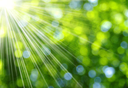 Photo pour Green blurred background and sunlight - image libre de droit