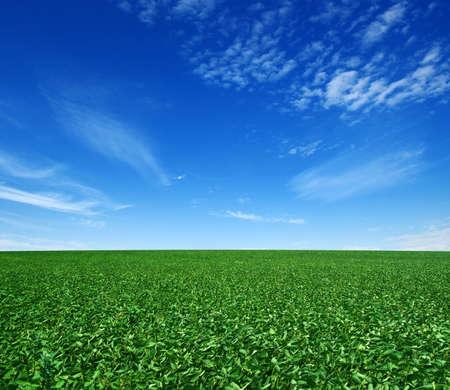 Photo pour green field and blue sky with clouds - image libre de droit