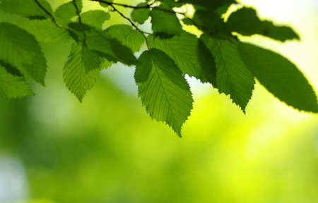 Photo for Spring background, green leaves on blurred bokeh - Royalty Free Image