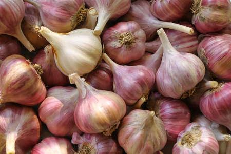 Foto für Heads of garlic in bulk close up - Lizenzfreies Bild