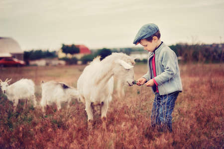 the boy in a cap in the field grazes goatsの写真素材