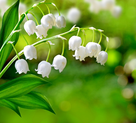 Photo pour Spring landscape. flowers lily of the valley - image libre de droit