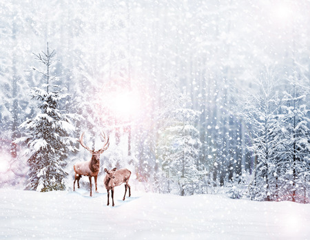 Photo for forest in the frost. Winter landscape. Snow covered trees. deer - Royalty Free Image