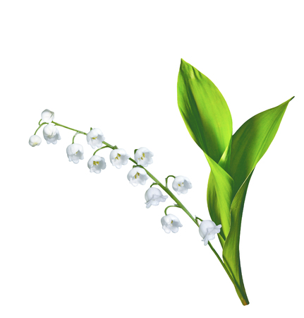Photo pour Lily of the valley flower on white background - image libre de droit