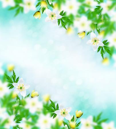 Photo pour The first delicate spring flower snowdrop. - image libre de droit