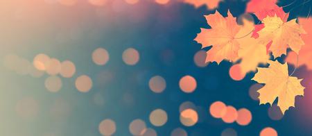 Foto de Autumn landscape with bright colorful foliage. Indian summer. - Imagen libre de derechos