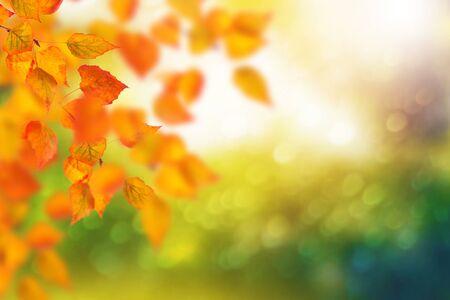Foto de Autumn landscape with bright colorful leaves. Indian summer. - Imagen libre de derechos