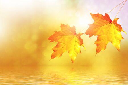 Photo pour autumn landscape with bright colorful leaves. Indian summer. nature - image libre de droit