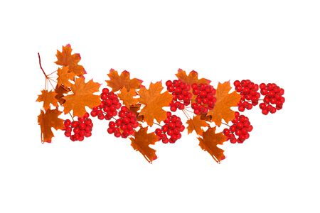 Photo pour Bright colorful autumn leaves isolated on white background. rowan - image libre de droit
