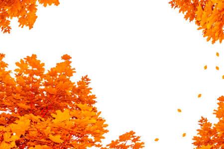 Photo pour Bright autumn maple leaf on a white background. foliage - image libre de droit